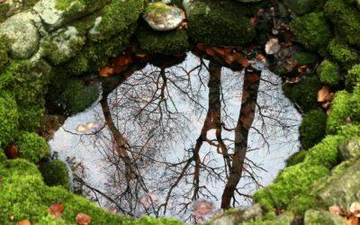 Grundwasserveränderung durch Klimawandel nachgewiesen