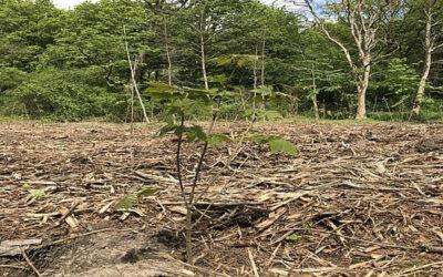 Neuer Mischwald: gut für Umwelt und Grundwasserneubildung