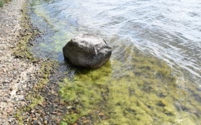 Forschung: Neue Erkenntnisse weisen Bedrohung durch Fadenalgen für klare Seen aus